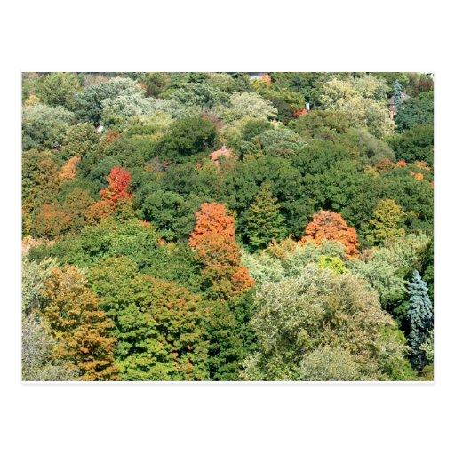 Fall Colors : HIGH PARK Toronto Postcard