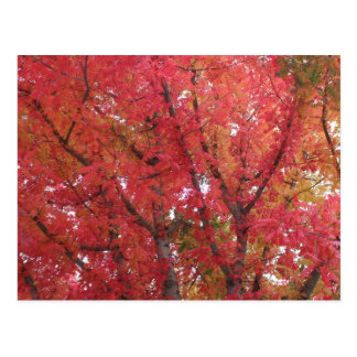 Fall Colors in Napa, California Postcard