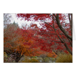 Fall colors in the Blue Ridge Mountains Card