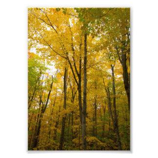 Fall colors, Munising, Michigan Art Photo