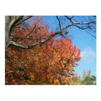Fall Colors Postcard