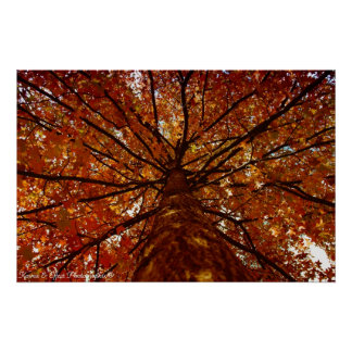 Fall Colors Poster