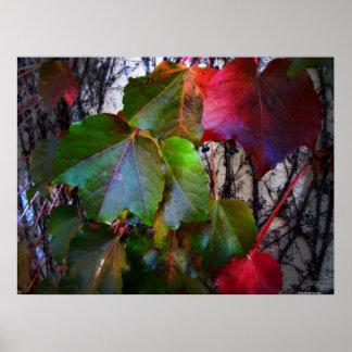 Fall Colors Poster - Huge