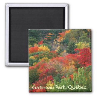 Fall colours in Gatineau Park Magnet