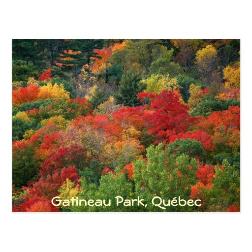 Fall Colours Post Cards