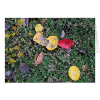 Fall Colours Sympathy Card