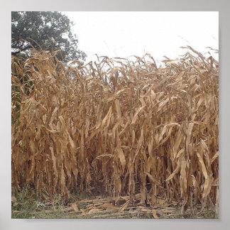 Fall Corn Canvas Poster