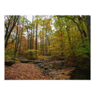 Fall Creek at Laurel Hill State Park Photograph