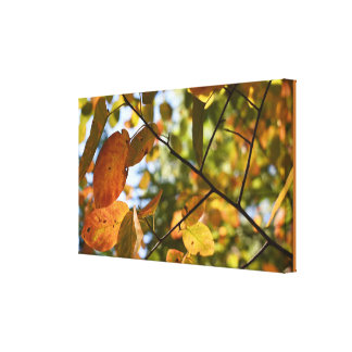 Fall Foliage Autumn Leaves Nature Tree Photography Canvas Print