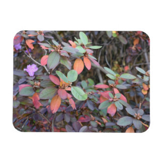 Fall Foliage Autumn Leaves Nature Tree Photography Magnet
