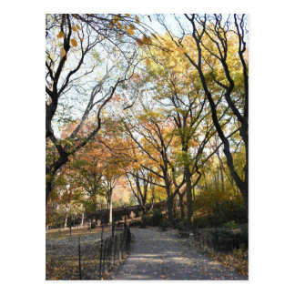 Fall Foliage Autumn Leaves Nature Tree Photography Postcard