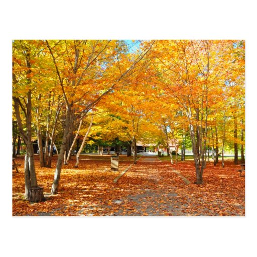 Fall Foliage Canyon Sainte Anne Quebec Postcard
