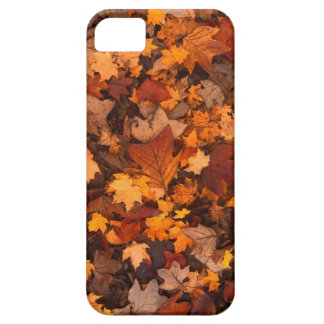 Fall-foliage Case For The iPhone 5