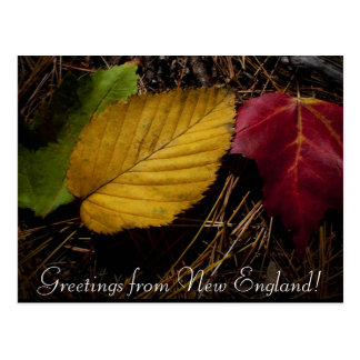 fall foliage forest floor postcard