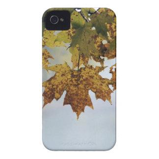 Fall Foliage iPhone 4 Case-Mate Case
