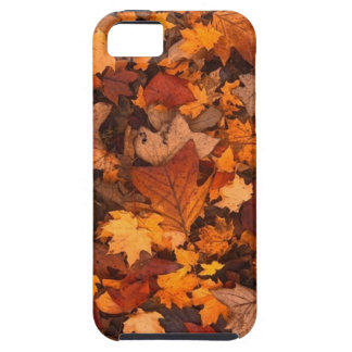 fall foliage iPhone 5 cover
