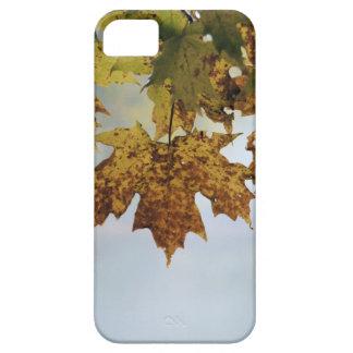 Fall Foliage iPhone 5 Covers