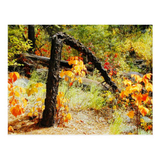 Fall Foliage, Jemez Mt. Trail, NM Postcard