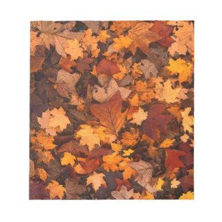 Fall-foliage Notepad