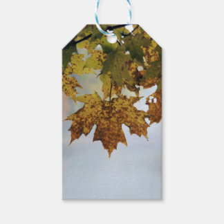 Fall Foliage Pack Of Gift Tags