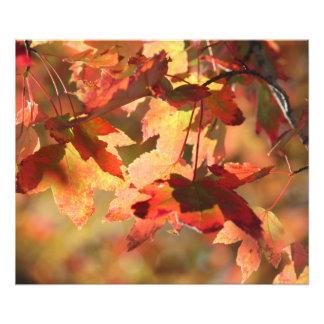 Fall foliage photo print