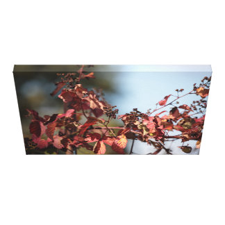 Fall foliage - vine canvas print