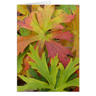 Fall Geranium Card