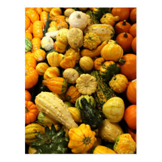Fall Gourds Postcard