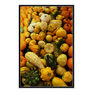 Fall Gourds Poster