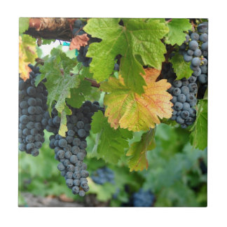 Fall Grape Vines ~ Napa Valley Tile