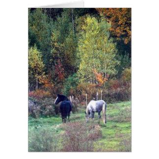 Fall grazing - Pine Ridge Farm Percherons Card
