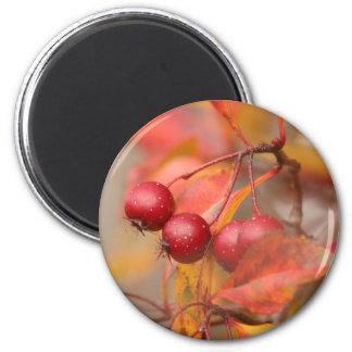 Fall Harvest magnet