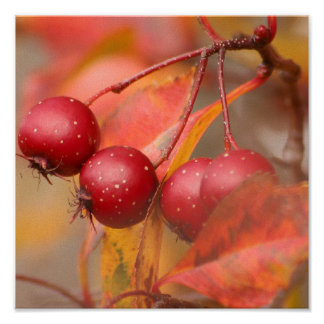Fall Harvest print