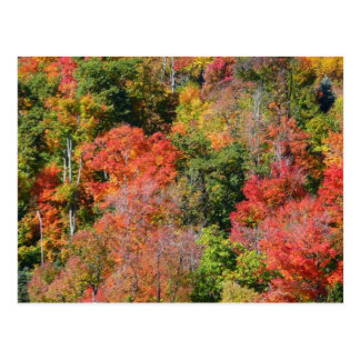 Fall Hillside Colorful Autumn Nature Photography Postcard