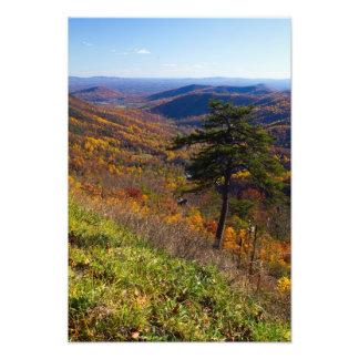 Fall in Shenandoah National Park, Virginia Photo