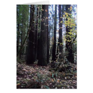 Fall in the Redwoods Greeting Card