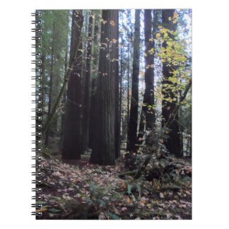 Fall in the Redwoods Note Books