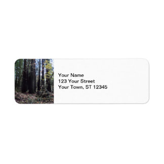Fall in the Redwoods Return Address Label