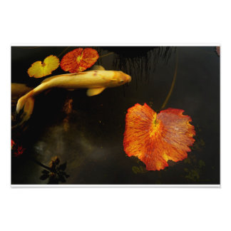 Fall Koi Photo Print
