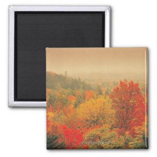 Fall landscape, New Hampshire, USA Magnet