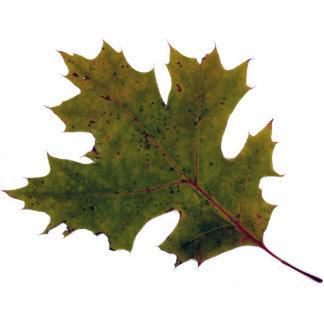 fall leaf 1 photo cutouts