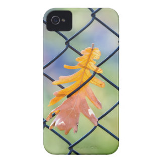 Fall Leaf Caught on a Fence iPhone 4 Cases