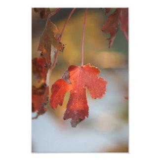 Fall Leaf close up Photo Enlargement