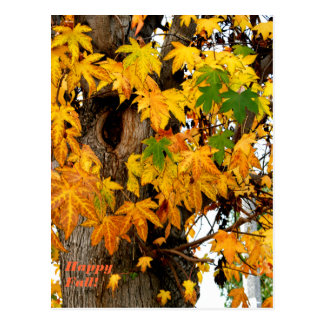 Fall Leaves and Tree Post Card
