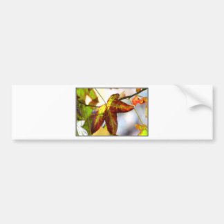 Fall Leaves Bumper Sticker