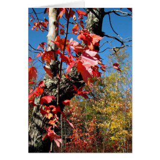 Fall Leaves Card