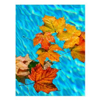 Fall leaves floating in pool postcard