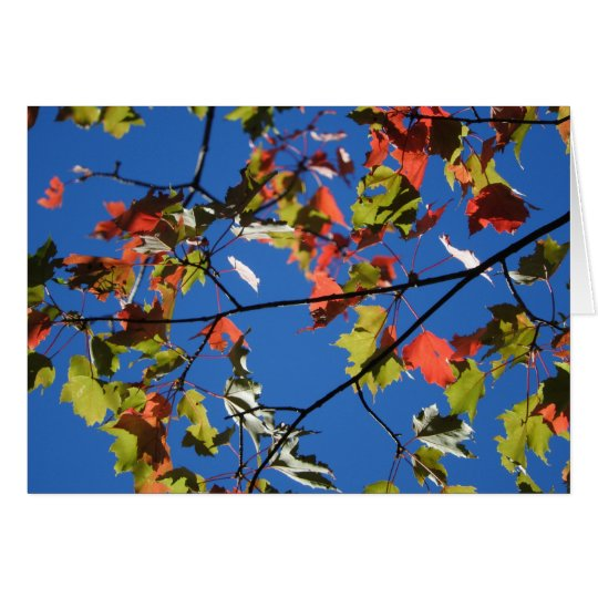 Fall Leaves Greeting Card, Blank Inside Card