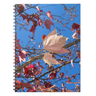 Fall Leaves in Red & Orange with Blue Sky Photo Notebooks