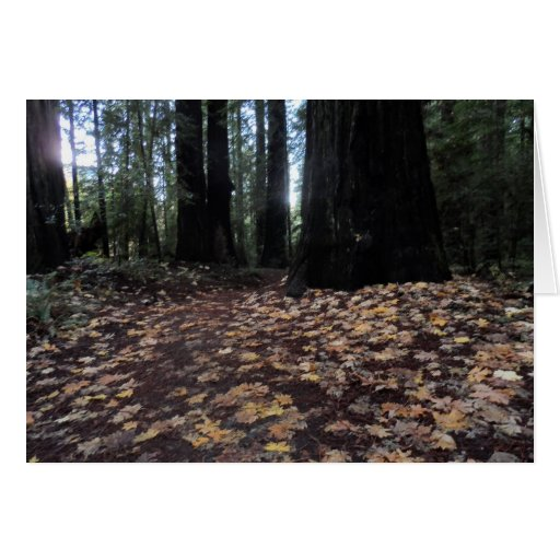 Fall Leaves in the Forest- Humboldt Redwoods Cards